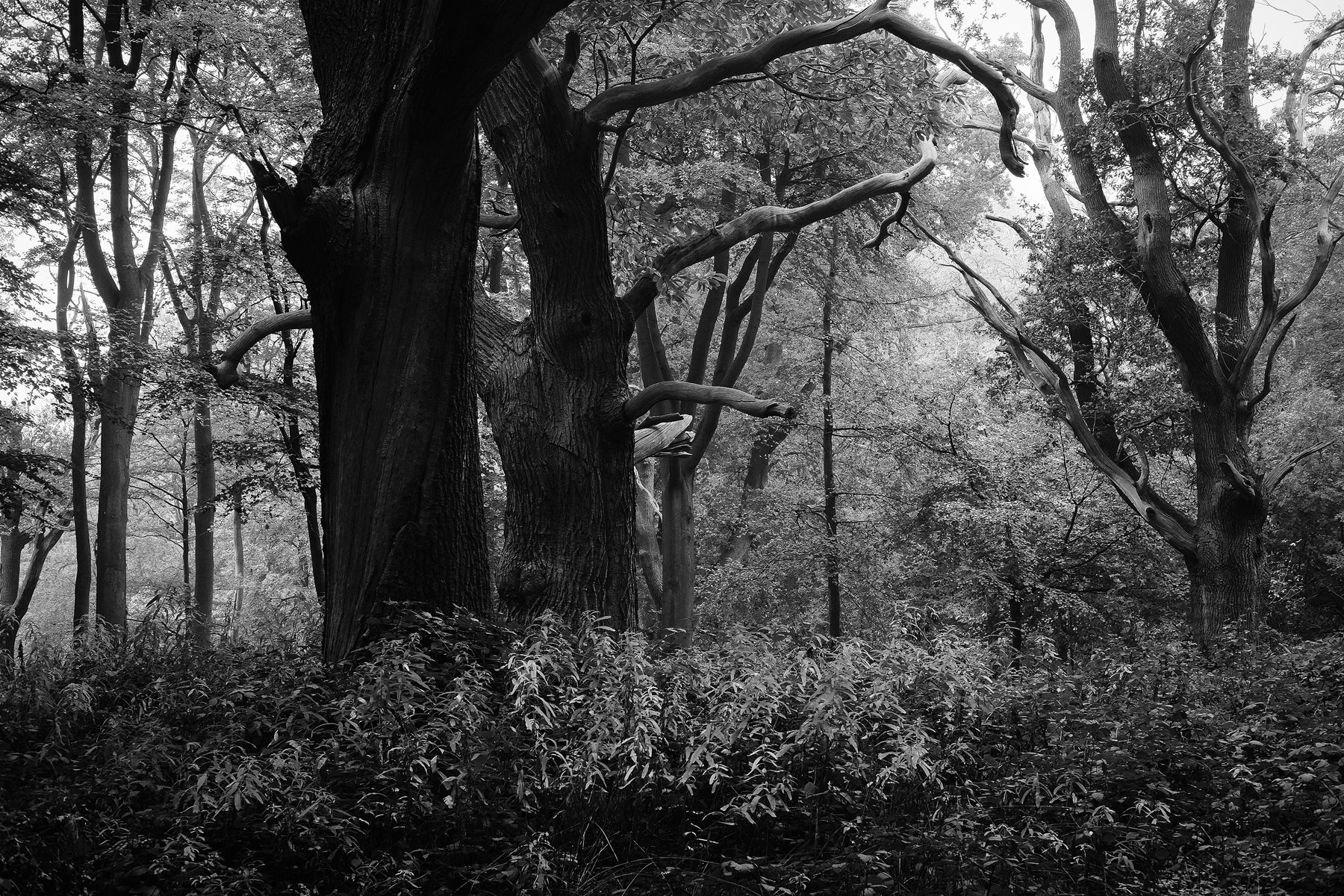 Mono Woodland scenes with Fuji X-Pro1