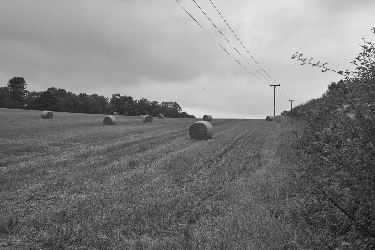 Fields of Harvest